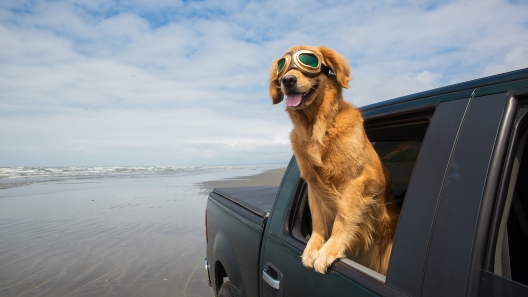 Washington Dog-Friendly Travel Guide