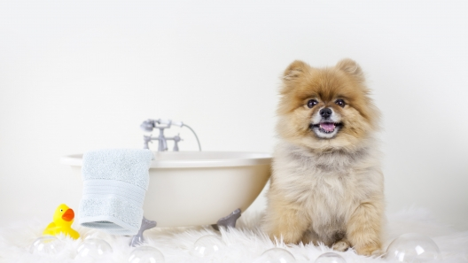 4 Useful Dog Grooming Tips