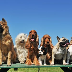 various breeds of puppies sitting on top of a picnic table