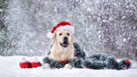 8 Great Christmas Gifts for Dogs