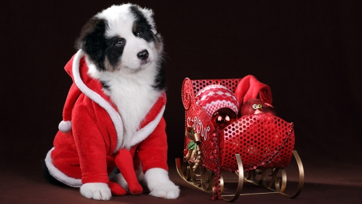 How to Prep Your Dog to Meet Santa