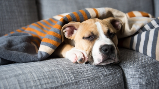 7 Signs Your Dog is in Pain