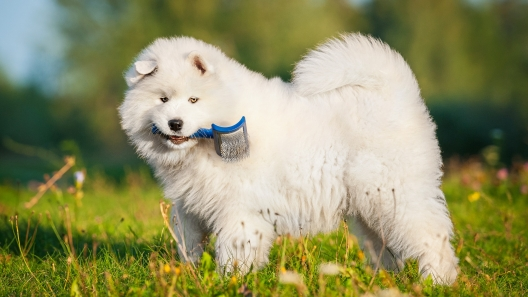 3 Reasons Why Brushing Your Dog is Important