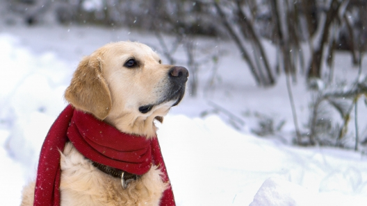 3 Winter Dog Grooming Tips