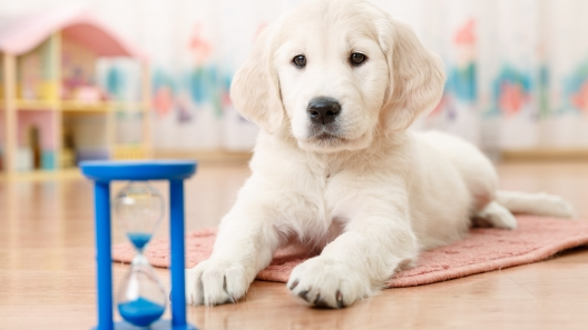 6 House Training Tips to Help Potty Train Your Puppy