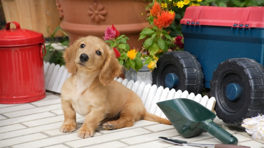 4 Dog-Friendly Gardening Tips