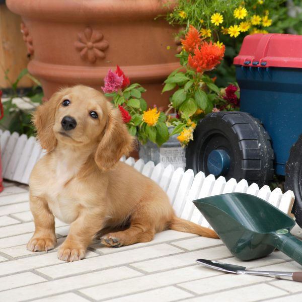 puppy sitting next to gardening tools