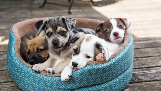 5 Qualities to Look for in a Great Breeder
