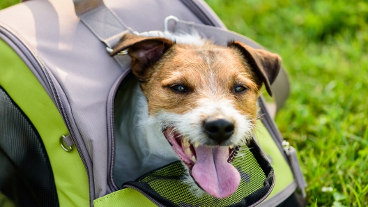 How to Choose the Right Dog Carrier
