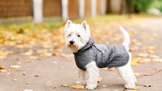 How to Buy the Right Dog Coat