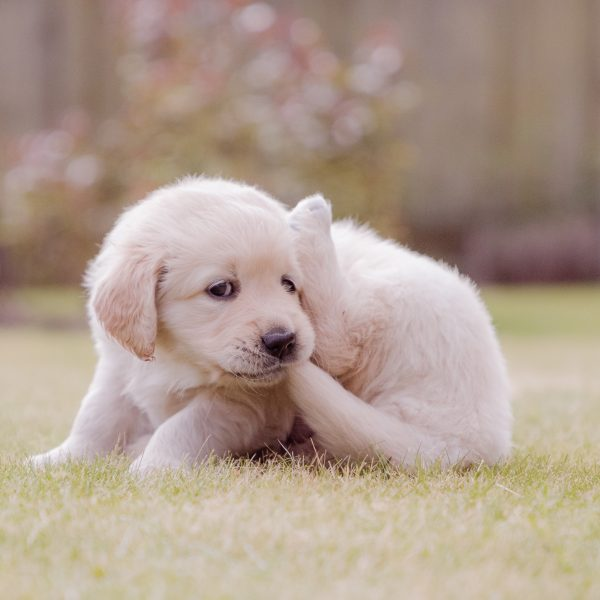 puppy biting its tail