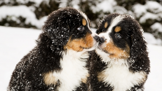 5 Winter Dog Dangers All Dog Owners Need to Know