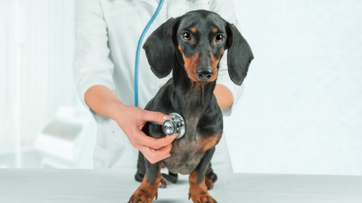 What You Should Know About Canine Diabetes