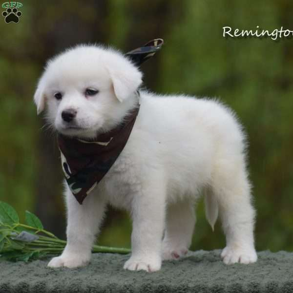 Remington, Great Pyrenees Puppy