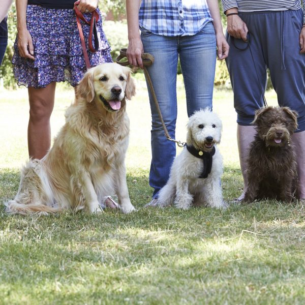 dogs and owners at an obedience class