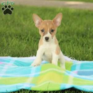 Puppies for Sale Under $300 - Price Under $300 | Greenfield
