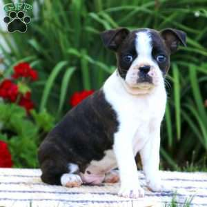 Welcome to Greenfield Puppies! | About Us | Greenfield Puppies