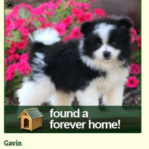 Reviews & Testimonials | Puppy Pictures & Stories