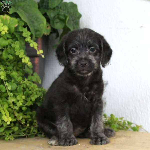 Fox Terrier Mix Puppies For