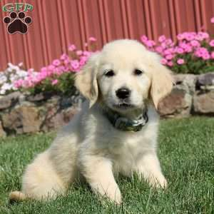 New Arrivals | See New Puppies | Greenfield Puppies