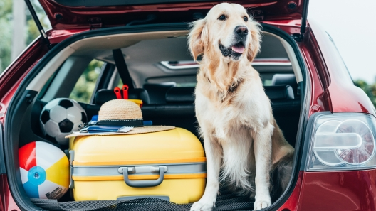 6 Tips for Traveling With Dogs