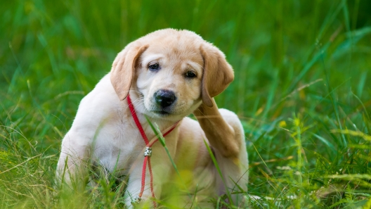 How to Protect Your Dog From Fleas