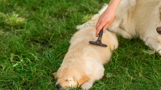 5 Common Types of Dog Grooming Brushes