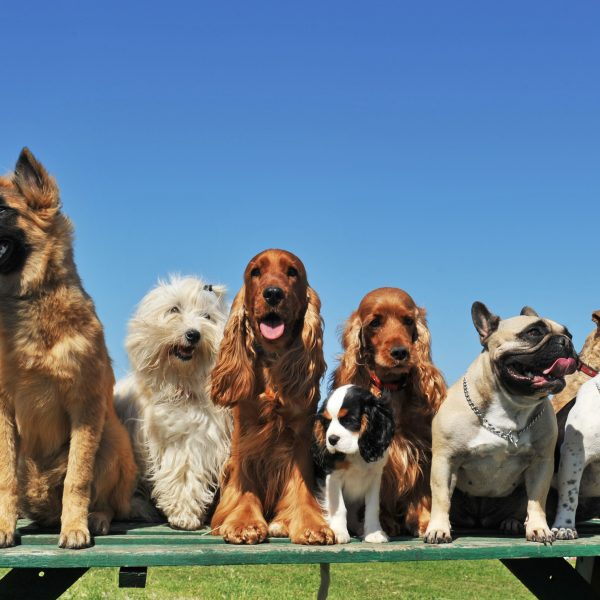 group of dogs on a picnic table