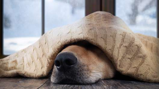 9 Dog Breeds That Hate Winter