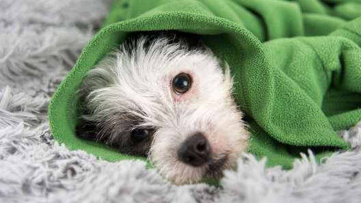 7 Common Health Problems in Dogs