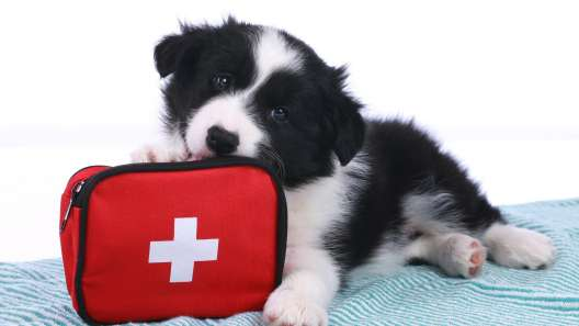 22 Things to Include in Your Dog First Aid Kit