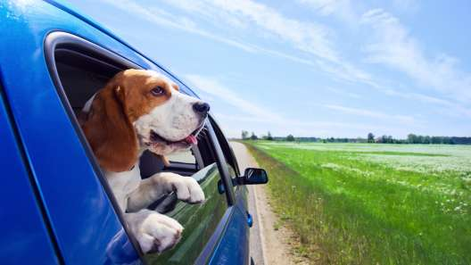 Iowa Dog-Friendly Travel Guide