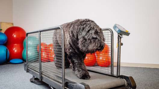 4 Benefits of Dogs Using Treadmills