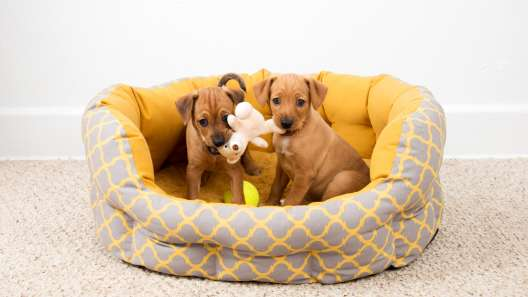 7 Calming Dog Bed Features to Help Your Dog Relax