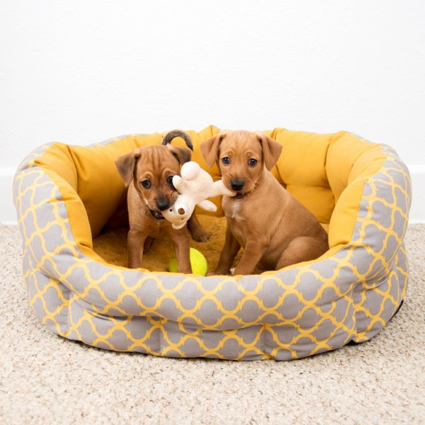 two brown puppies in a dog bed with a toy