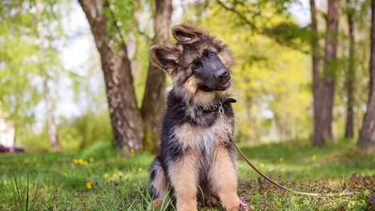 5 Common Dog Training Myths to Stop Believing Immediately