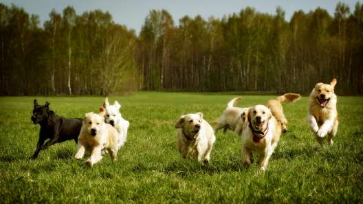 9 of the Most Active Dog Breeds