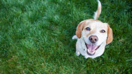 Why Do Dogs Eat Poop? 6 Reasons Why Dogs Eat Poop