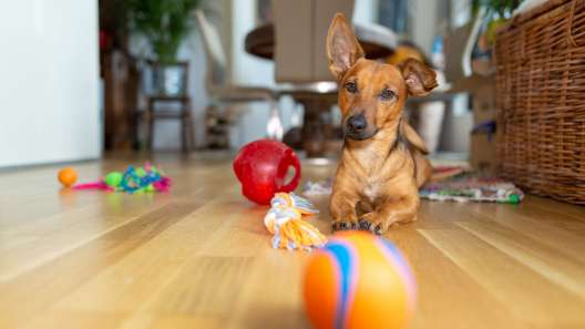 5 Common Mistakes People Make When Playing With Dogs