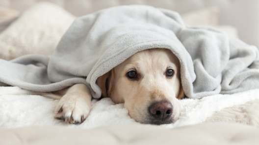 10 Signs Your Dog is Bored