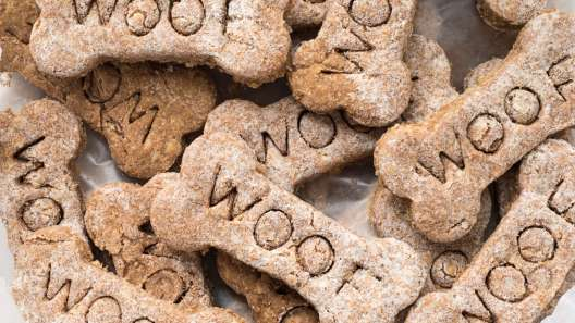What to Know About CBD Dog Treats