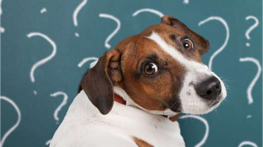 7 Ways You're Confusing Your Dog