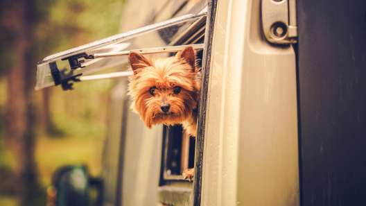6 Tips for RVing With Your Dog