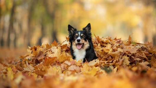 Should You Let Your Dog Play in Leaves?