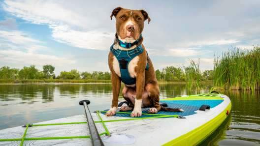 16 Tips for Taking Your Dog Paddling