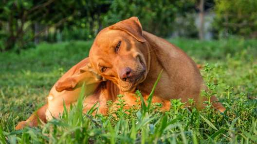 5 Common Skin Problems in Dogs