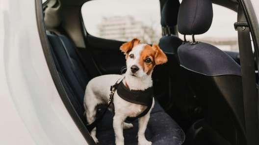 New Mexico Dog-Friendly Travel Guide