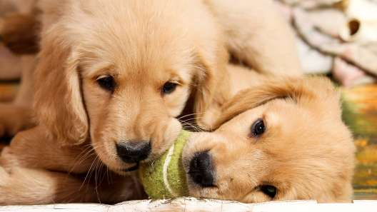6 Tips for Safe Puppy Play Sessions