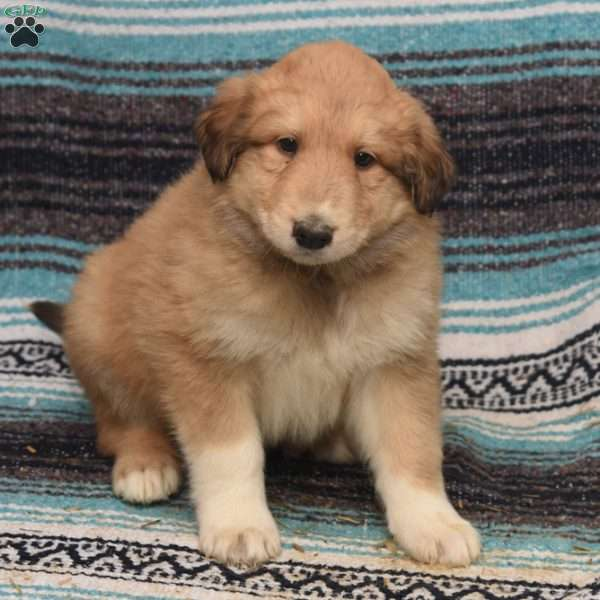 Canyan, Great Pyrenees Mix Puppy