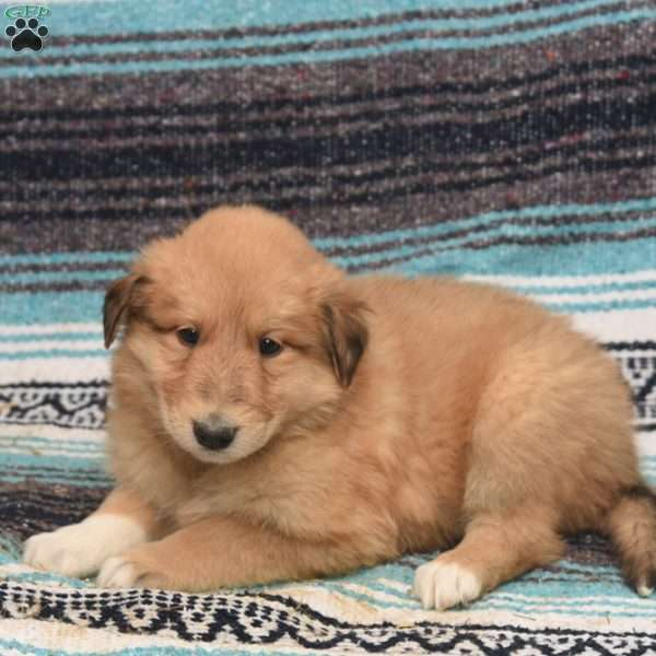 Carly, Great Pyrenees Mix Puppy